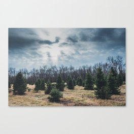 Tree Farm Canvas Print