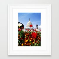 patriotic Framed Art Prints featuring Patriotic Tulips by Madison Webb