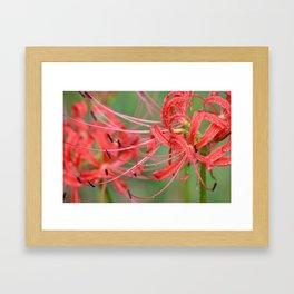 Hurricane Blooms Framed Art Print