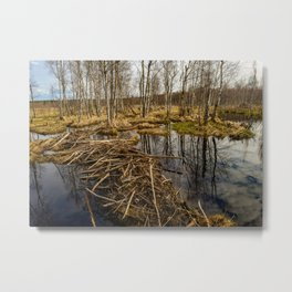 Spring sky reflected in backwaters beaver dams Metal Print
