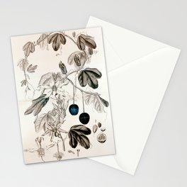 Murucuja baueri/Passiflora aurantia Stationery Cards