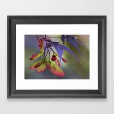 Japanese Maple Seeds Framed Art Print