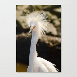 Snowy Egret Animal / Wildlife Photograph Canvas Print