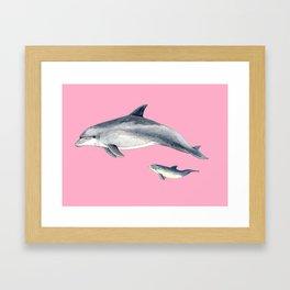 Bottlenose dolphin pink Framed Art Print