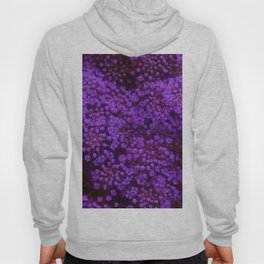 Purple Queen Anne's Lace Landscape Hoody