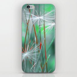 Dandelion weightlessness iPhone Skin