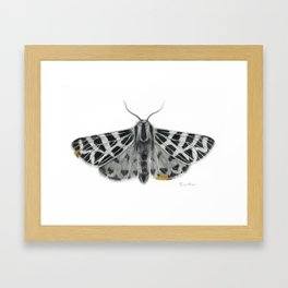 Kintsugi - A Graphite Drawing of a Moth by Brooke Figer Framed Art Print