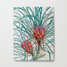 A Protea flower Metal Print