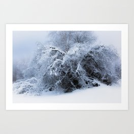 Snow covered branches Winter cold at Creamers Field Fairbanks  Alaska Art Print