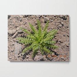 roar trip, green plant, greenery, plants, pokey, stickery, high altitude Metal Print