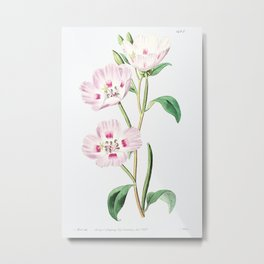 The spotted blush (enothera) from Edwards's Botanical Register (1829—1847) by Sydenham Edwards, John Metal Print
