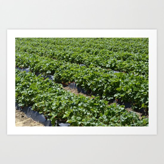 Strawberry Field Art Print