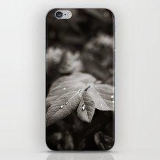 Drops of Rain  iPhone & iPod Skin