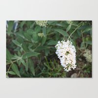 rileigh smirl Canvas Prints featuring Daisies by Rileigh Smirl