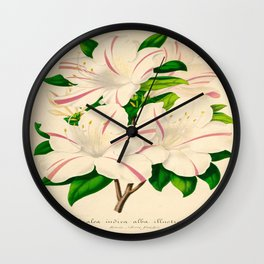 Azalea Alba Magnifica (Rhododendron indica) Vintage Botanical Floral Scientific Illustration Wall Clock