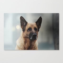 Portrait of a German Shepherd in Venice Canvas Print