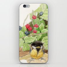 The Little Blue Jay - Little lost chick iPhone & iPod Skin