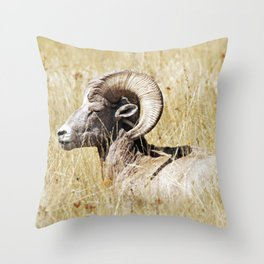 Rocky Mountain Bighorn Throw Pillow