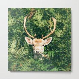 deer cerf 4 Metal Print