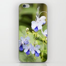 Blue Glory Bower Flowers iPhone Skin