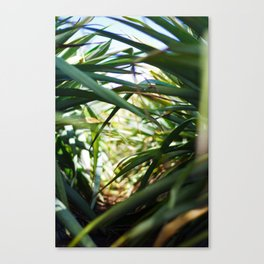 Sunlight in plantation  Canvas Print