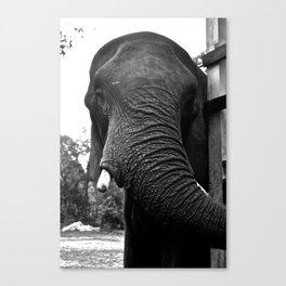 Grand Elephant- Three Canvas Print