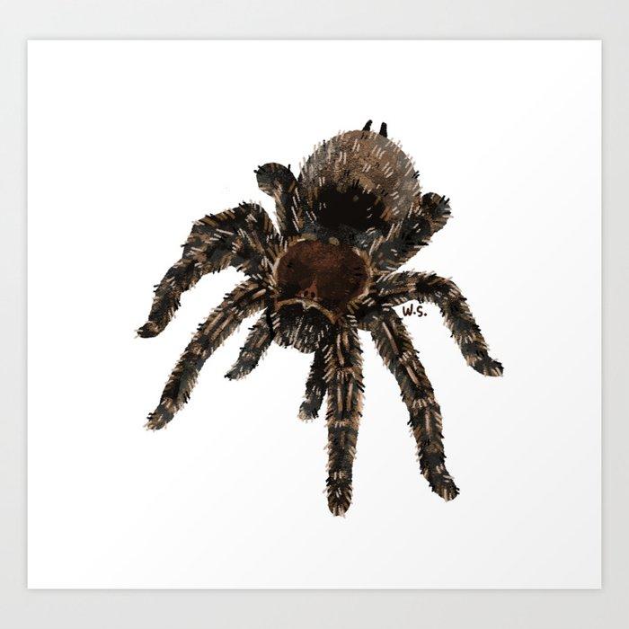 Tarantula Spider Drawing Art Print By Tarantulaheaven