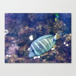 Stunner Fish Canvas Print
