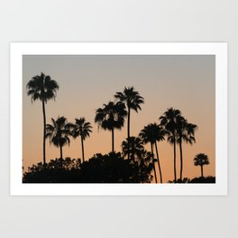 Palm Trees and Sunsets Art Print