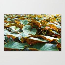 flora in Brooklyn Canvas Print