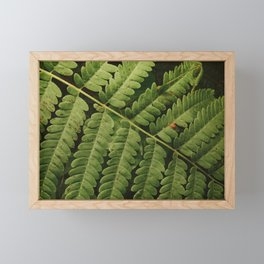 Summer Fern Detail 2 Framed Mini Art Print