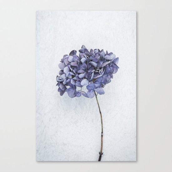 Dried Blue Hydrangea Canvas Print