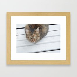 Brown Cat Glance Framed Art Print
