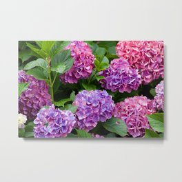 Pink & Purple Flowers Metal Print