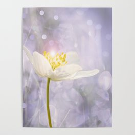 White Flower In The Forest Enchantments - Bokeh Background #decor #buyart #society6 Poster