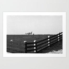 Dutch landscape with sheep Art Print
