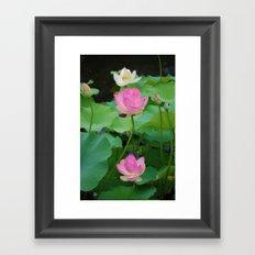 Lotus Blossom Flower 25 Framed Art Print