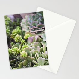 Blushing Succulents Stationery Cards