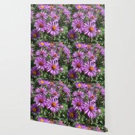 Autumn Amethyst - New England Aster flowers Wallpaper
