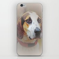 the hound iPhone & iPod Skins featuring Hound dog by Doug McRae