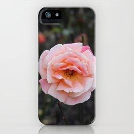 Blooming Blush Rose iPhone Case
