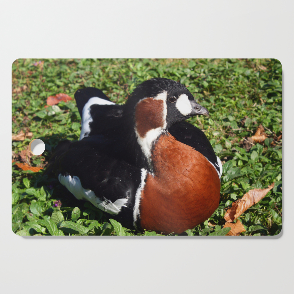 Red Breasted Goose Lying On Green Grass Under Sunlight In Summer Cutting Board by gregory_dubus (DCB13234070) photo