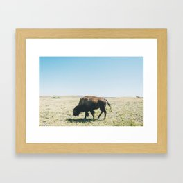 Waterton Locals Framed Art Print