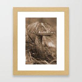 Russian brown cap boletus Framed Art Print