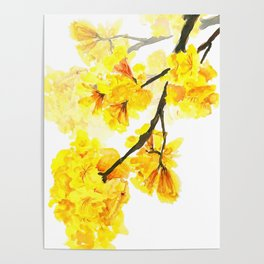 yellow trumpet trees watercolor yellow roble flowers yellow Tabebuia Poster