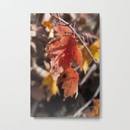 Fall in Manchester, NH Metal Print
