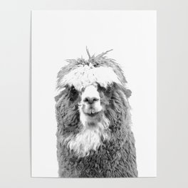 Black and White Alpaca Poster