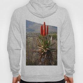 Flowering Succulent Torch Aloe Plant Countryside, South Africa Hoody