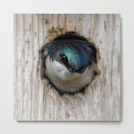 Meeting the New Nestbox Homeowner Metal Print