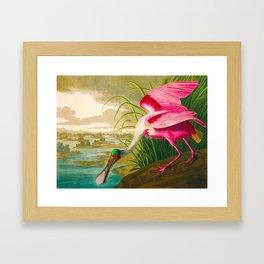 Roseate Spoonbill Bird pink Framed Art Print